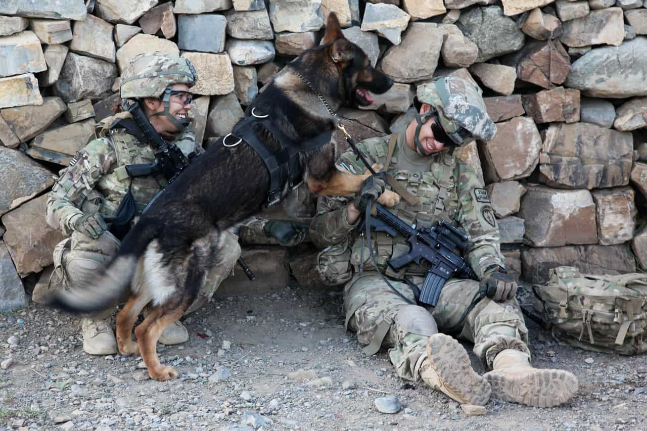40 Sizzling Pictures of Military Service Dogs  (28)
