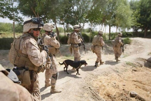 MIAN POSHTEH, AFGHANISTAN- JULY 4:  U.S. Marines from 2nd Marine Expeditionary Brigade, RCT 2nd Battalion 8th Marines Echo Co. and a bomb sniffing dog manuever on a building they were taking fire from on July 4, 2009 in Mian Poshteh, Afghanistan . The Marines are part of Operation Khanjari which was launched to take areas in the Southern Helmand Province that Taliban fighters are using as a resupply route and to help the local Afghan population prepare for the upcoming presidential elections.  (Photo by Joe Raedle/Getty Images)