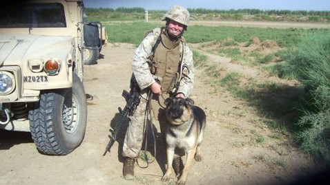 40 Sizzling Pictures of Military Service Dogs  (3)