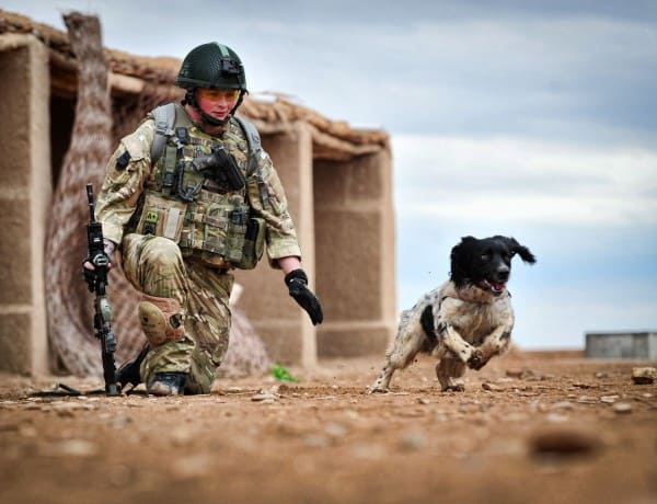 40 Sizzling Pictures of Military Service Dogs  (31)