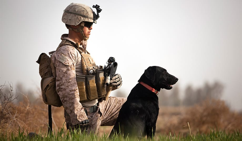 40 Sizzling Pictures of Military Service Dogs  (33)
