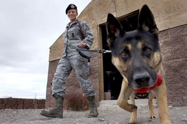 40 Sizzling Pictures of Military Service Dogs  (5)