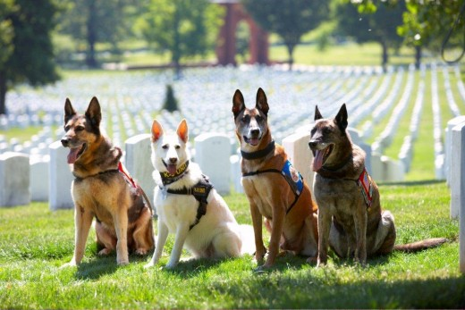 40 Sizzling Pictures of Military Service Dogs  (6)