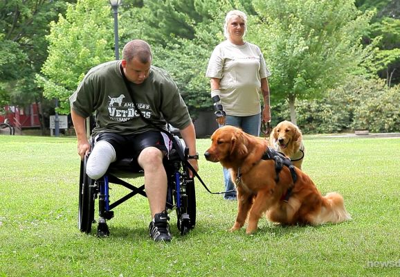 40 Sizzling Pictures of Military Service Dogs  (7)