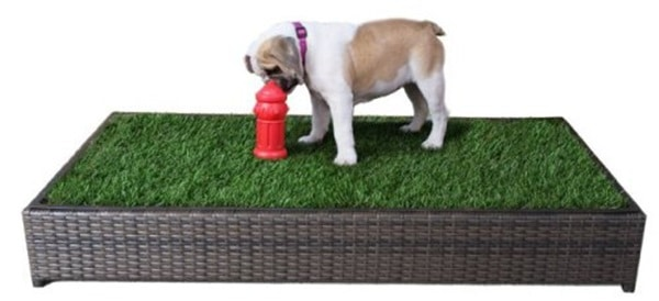 5 Indoor Dog Potty Slolutions that will Free you from the Leash 1
