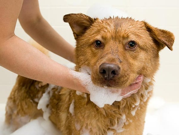 Amazing Solutions for Dog Acne 1