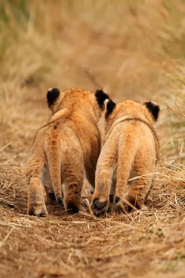 Amazing lion cubs pictures (25)