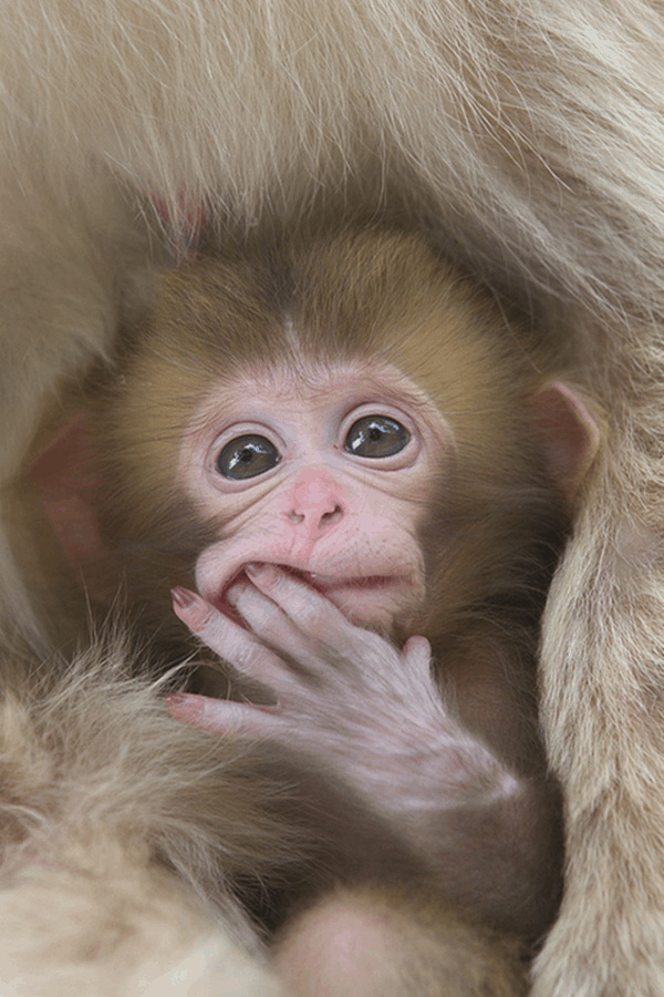 Monkey Baby Pictures (1)