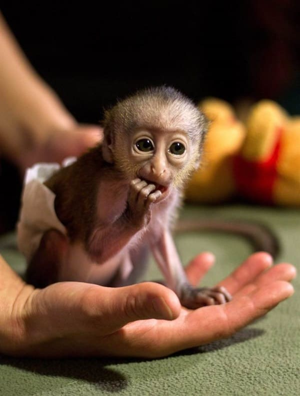 Monkey Baby Pictures (13)