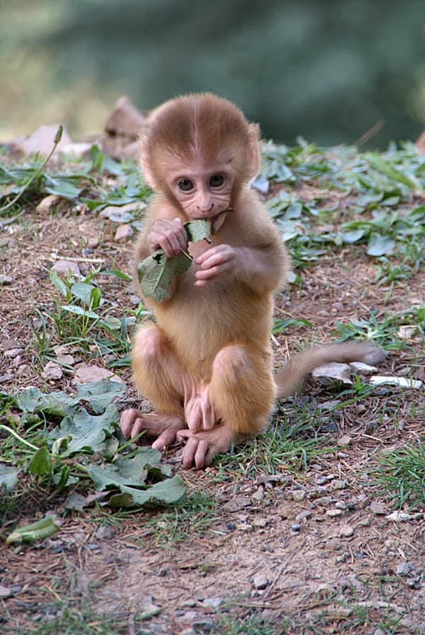 Monkey Baby Pictures (15)