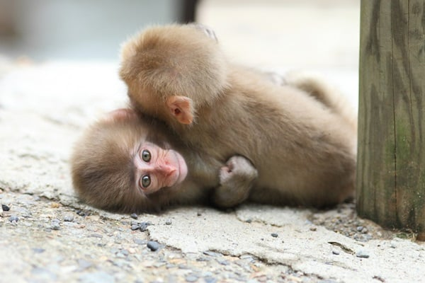 Monkey Baby Pictures (17)