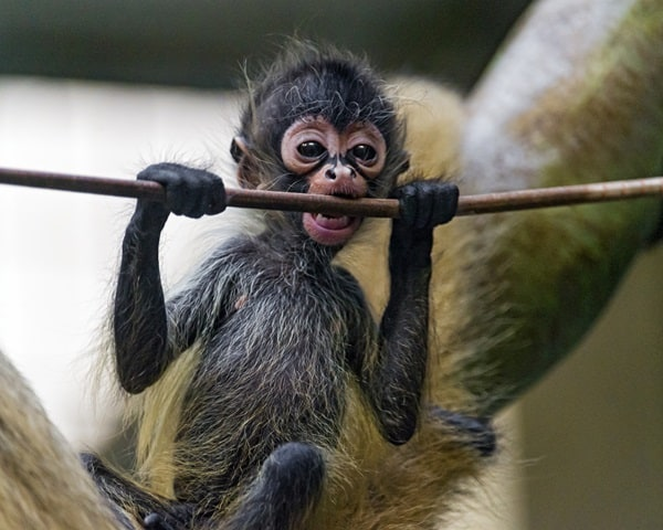 Monkey Baby Pictures (18)
