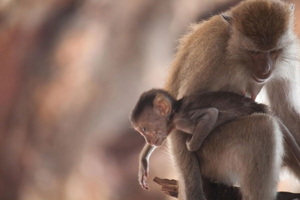Monkey Baby Pictures (19)
