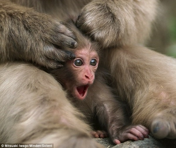Monkey Baby Pictures (20)