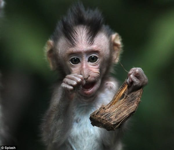 Monkey Baby Pictures (21)