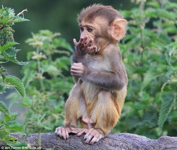 Monkey Baby Pictures (22)