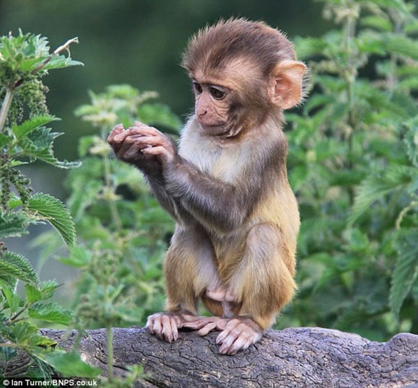 Monkey Baby Pictures (23)