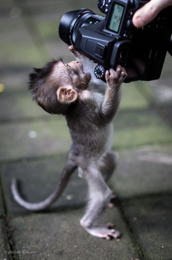Monkey Baby Pictures (24)