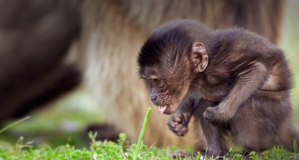 Monkey Baby Pictures (26)