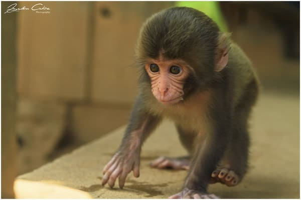 Monkey Baby Pictures (29)