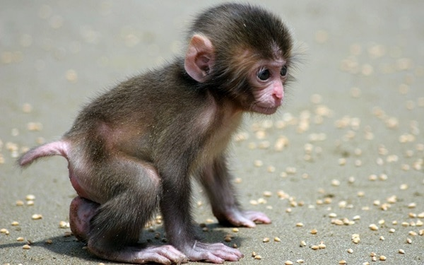 Monkey Baby Pictures (30)