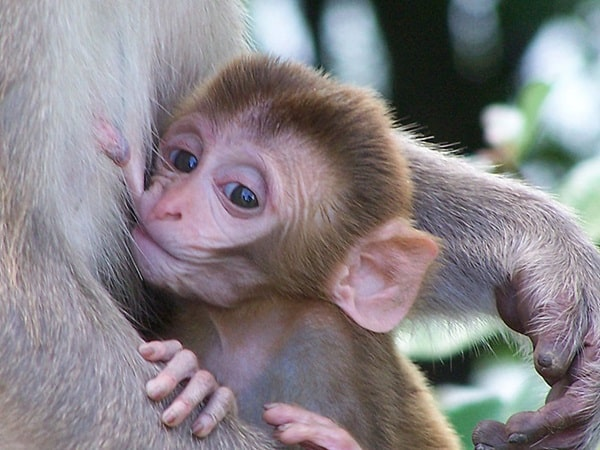 Monkey Baby Pictures (31)