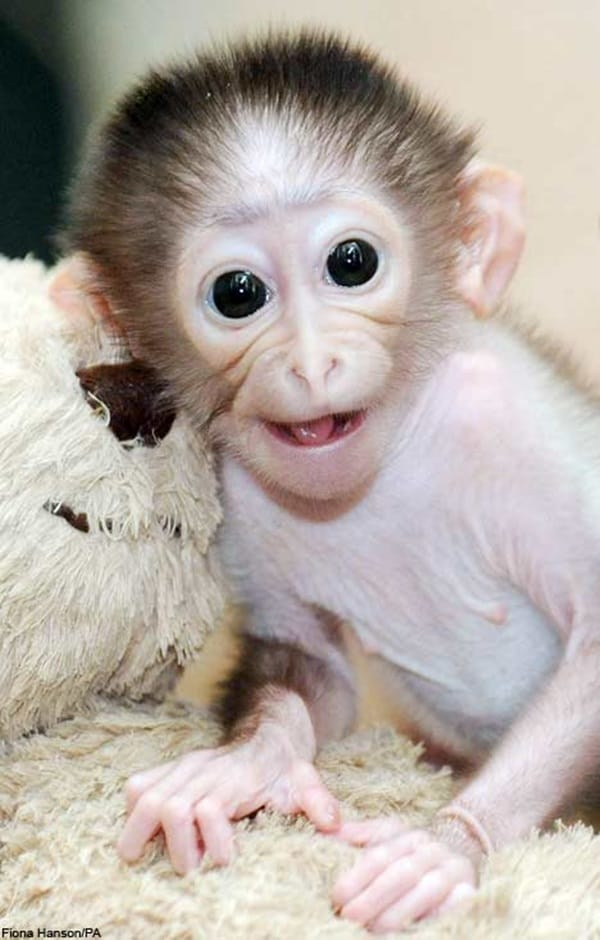 Monkey Baby Pictures (32)