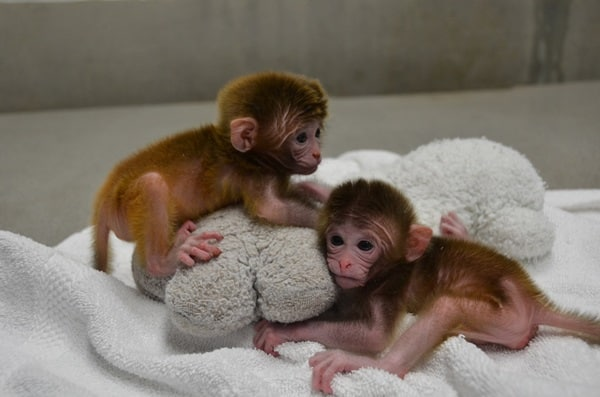 Monkey Baby Pictures (33)
