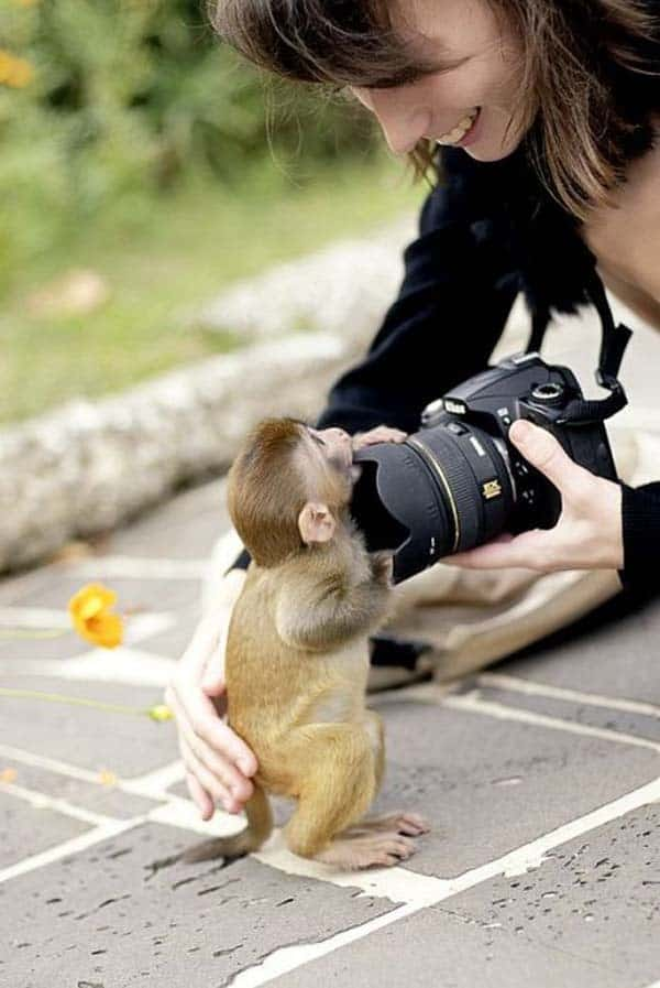 Monkey Baby Pictures (34)