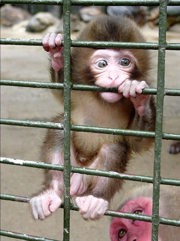 Monkey Baby Pictures (35)