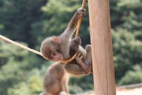 Monkey Baby Pictures (37)