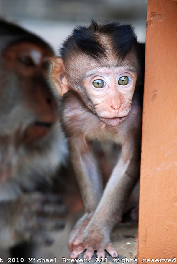 Monkey Baby Pictures (38)