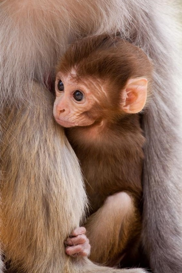 Monkey Baby Pictures (39)