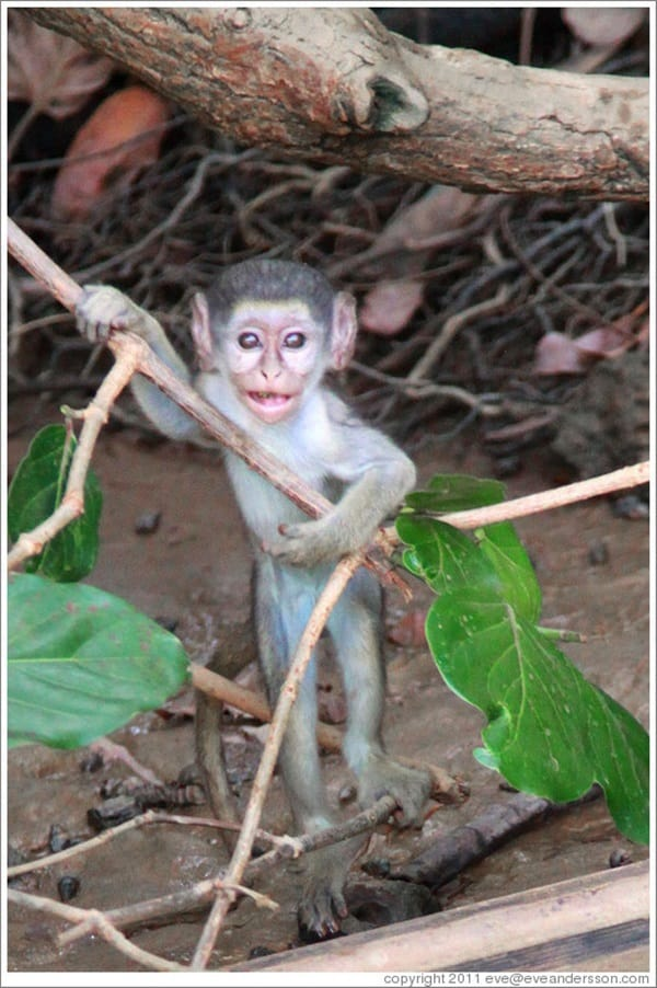 Monkey Baby Pictures (40)