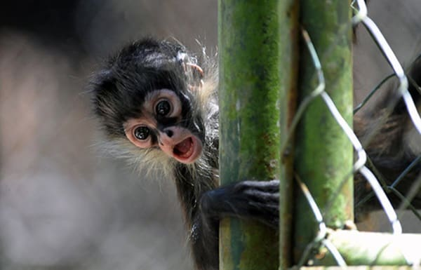 A baby monkey at the Rosy Walter zoo