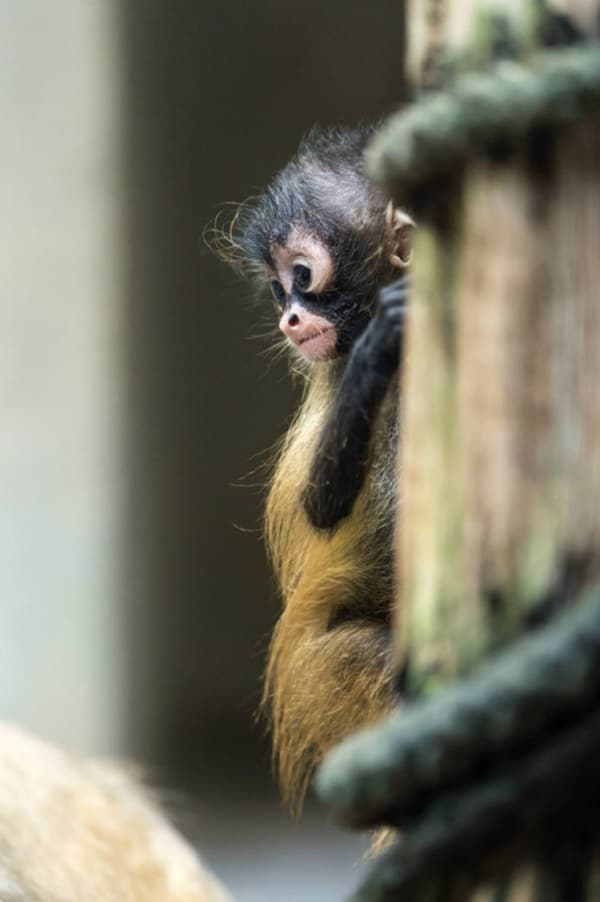 Monkey Baby Pictures (42)