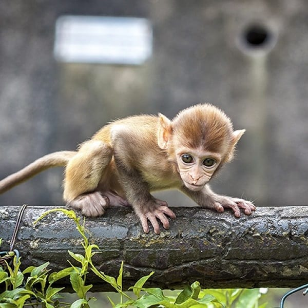 Monkey Baby Pictures (43)