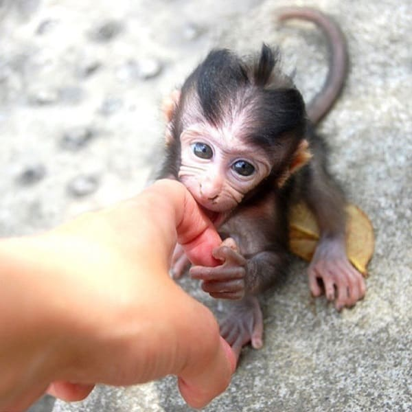 Monkey Baby Pictures (44)