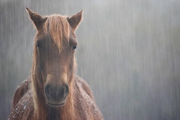 40 Pictures of Animals in Rain 1