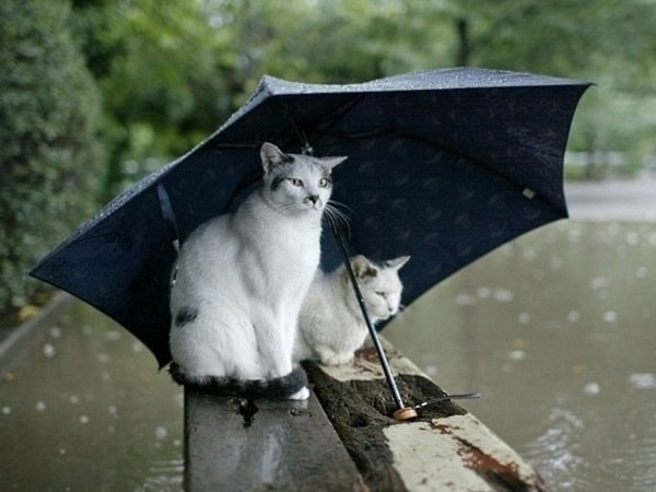 40 Pictures of Animals in Rain 10