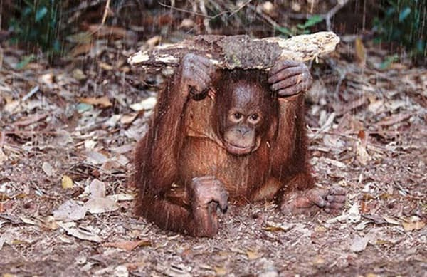 40 Pictures of Animals in Rain 12