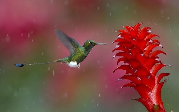 40 Pictures of Animals in Rain 14