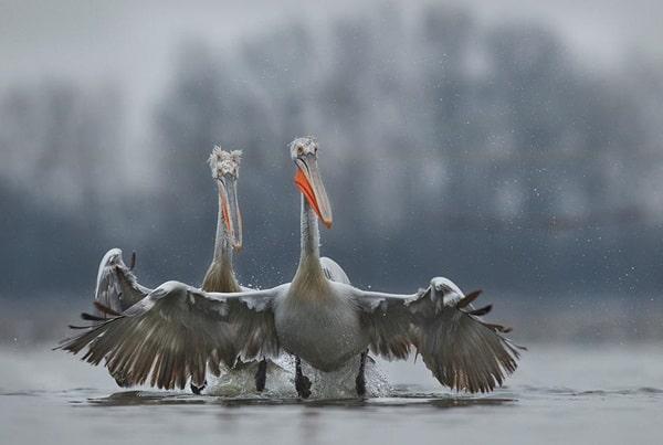 40 Pictures of Animals in Rain 15