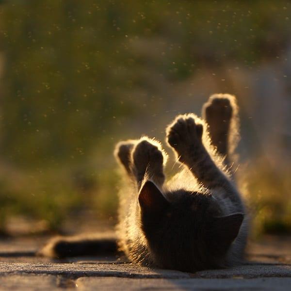 40 Pictures of Animals in Rain 16