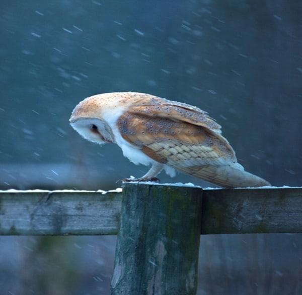 40 Pictures of Animals in Rain 18