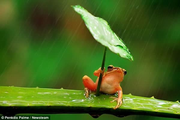 40 Pictures of Animals in Rain 2
