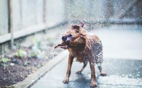 40 Pictures of Animals in Rain 20