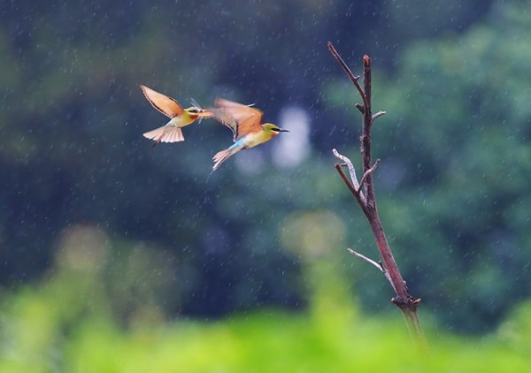 40 Pictures of Animals in Rain 21