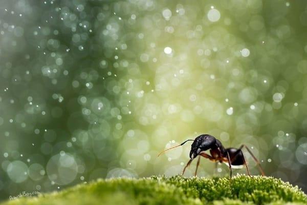 40 Pictures of Animals in Rain 24