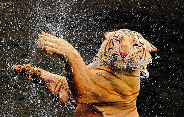 40 Pictures of Animals in Rain 26